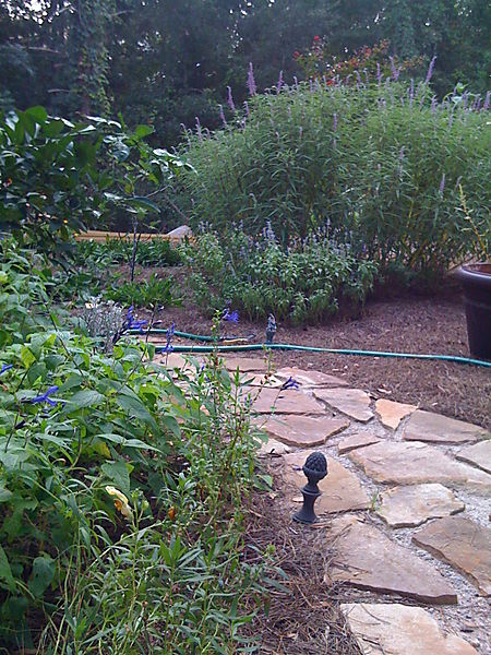 Phone pix garden etc 005